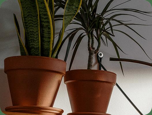 Kamerplanten die water krijgen met een gieter