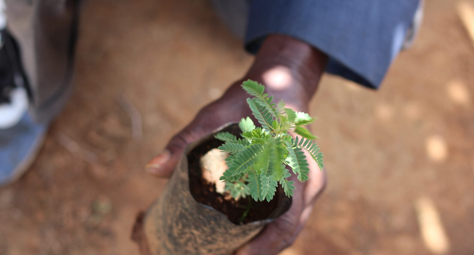 Planting new tree Tanzania Trees for the future