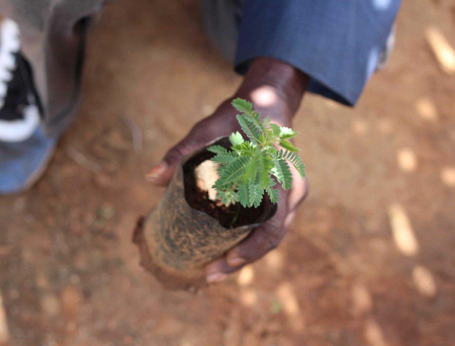 Trees for the future planting tree Tanzania